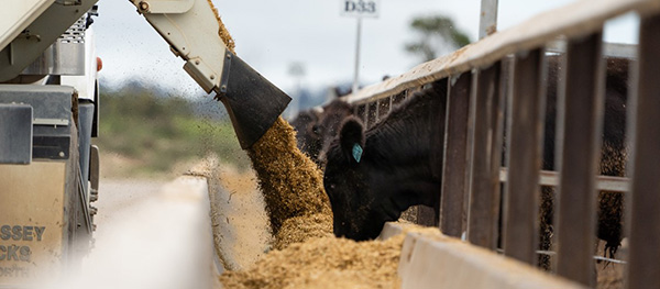 Feedlot of the Year